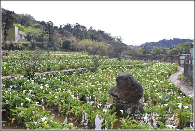 陽明山竹子湖-2018-03-17.jpg