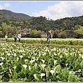 陽明山竹子湖-2018-03-31.jpg