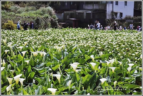 陽明山竹子湖-2018-03-33.jpg