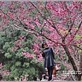 九族文化村櫻花季-2018-02-102.jpg