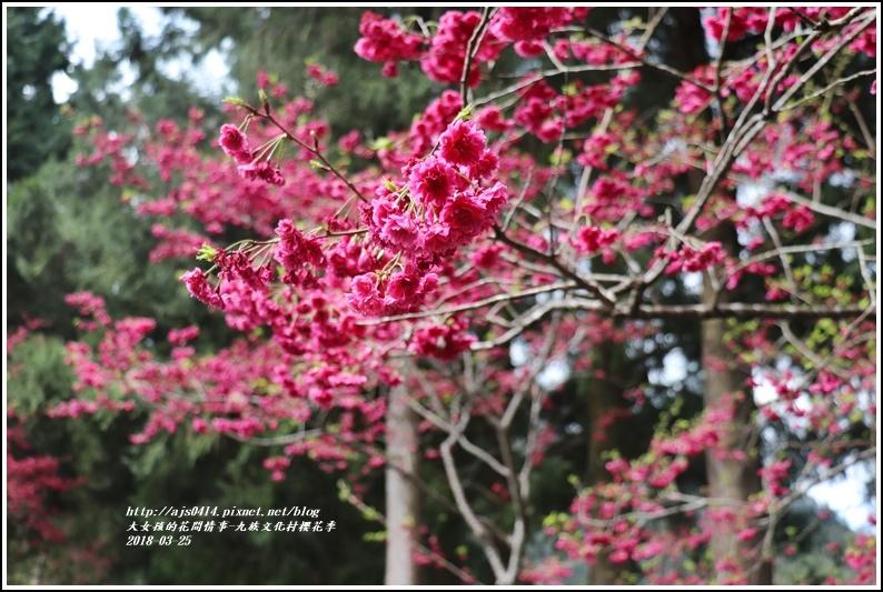 九族文化村櫻花季-2018-02-107.jpg