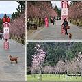 九族文化村櫻花季-2018-02-113.jpg