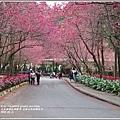 九族文化村櫻花季-2018-02-133.jpg