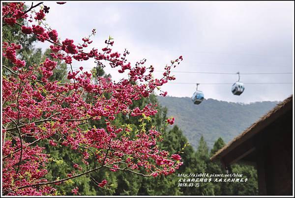 九族文化村櫻花季-2018-02-138.jpg