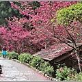九族文化村櫻花季-2018-02-139.jpg