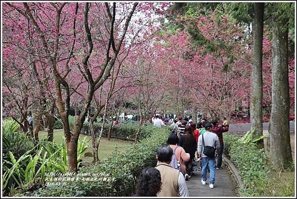 九族文化村櫻花季-2018-02-151.jpg