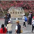 九族文化村櫻花季-2018-02-155.jpg