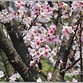 陽明山櫻花季-2018-03-08.jpg