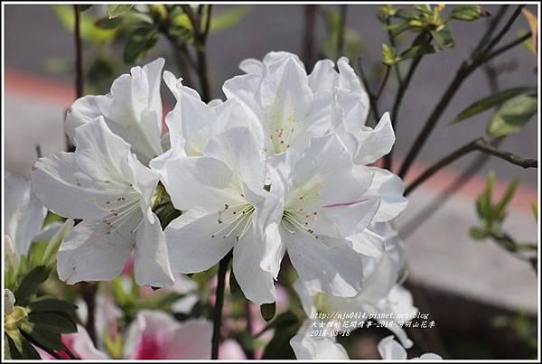 陽明山櫻花季-2018-03-10.jpg
