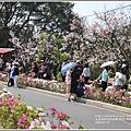 陽明山櫻花季-2018-03-15.jpg