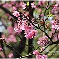 陽明山櫻花季-2018-03-42.jpg