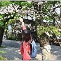 陽明山櫻花季-2018-03-74.jpg
