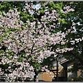 陽明山櫻花季-2018-03-76.jpg