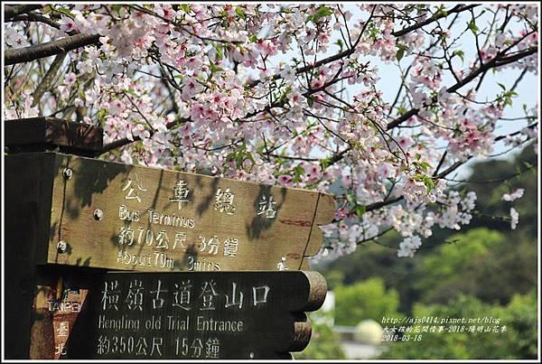 陽明山櫻花季-2018-03-83.jpg