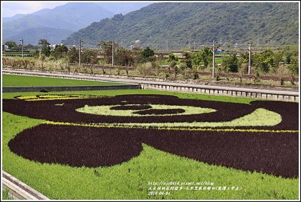 玉里黑熊彩繪田(熊讚上學去)-2018-04-14.jpg