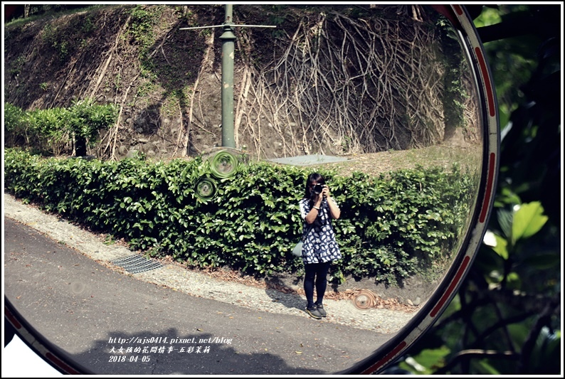 五彩茉莉-2018-04-08.jpg