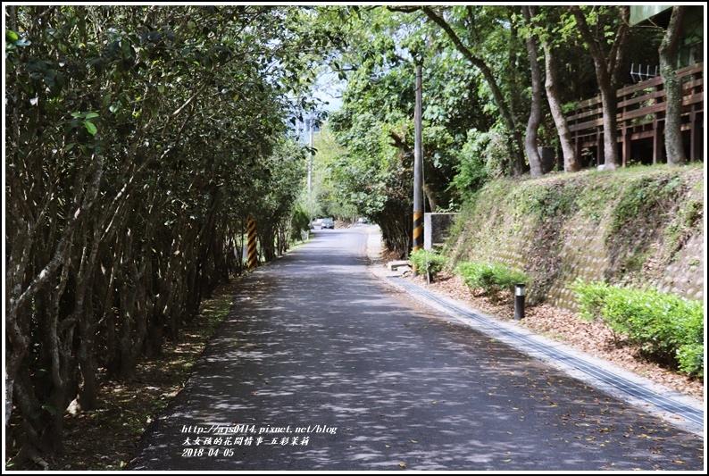 五彩茉莉-2018-04-09.jpg