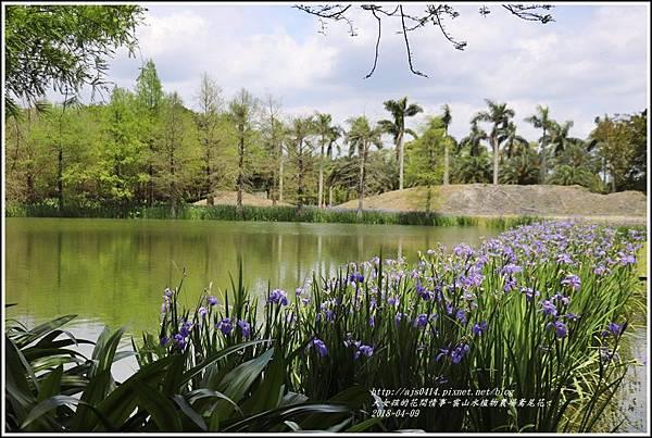 雲山水植物農場鳶尾花-2018-04-17.jpg