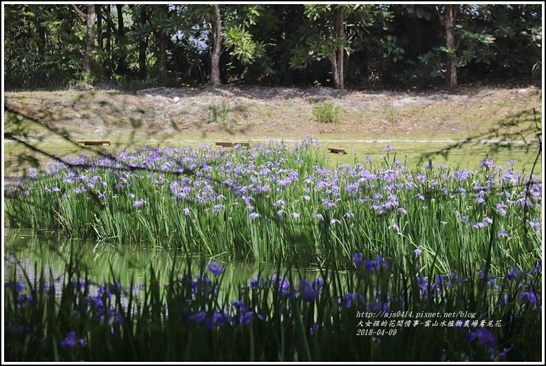 雲山水植物農場鳶尾花-2018-04-23.jpg