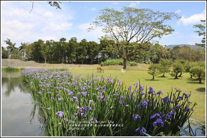 雲山水植物農場鳶尾花-2018-04-24.jpg