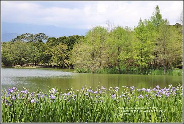 雲山水植物農場鳶尾花-2018-04-28.jpg