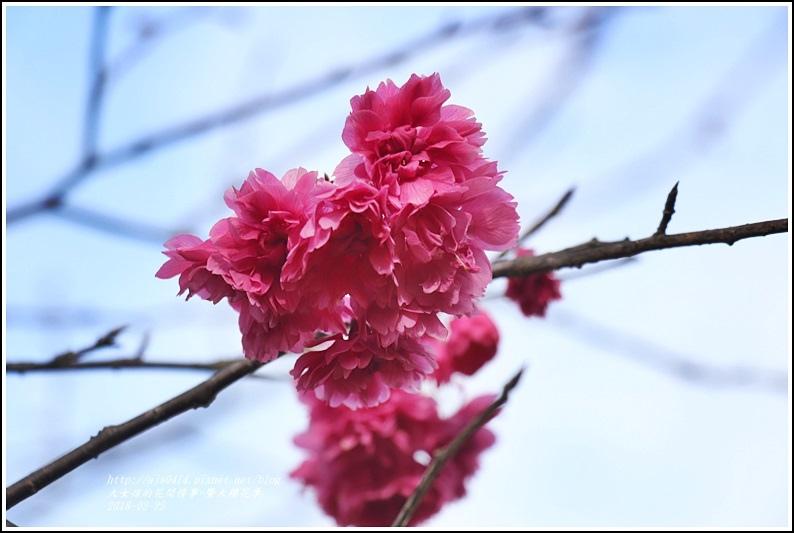 暨大櫻花季-2018-02-18.jpg