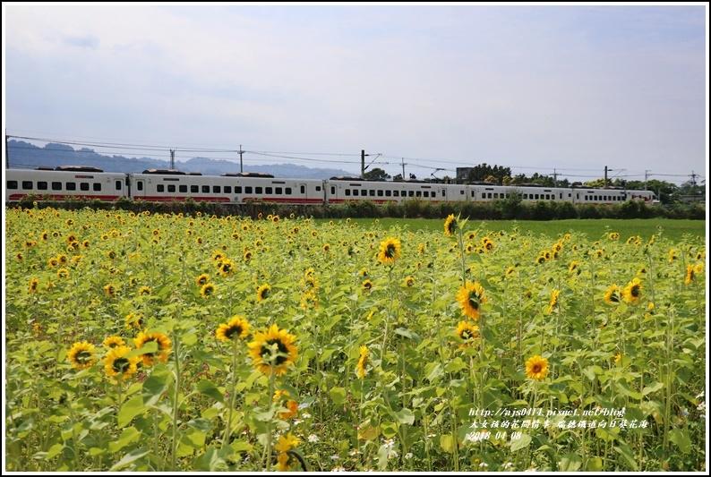 瑞穗鐵道向日葵花海-2018-04-07.jpg