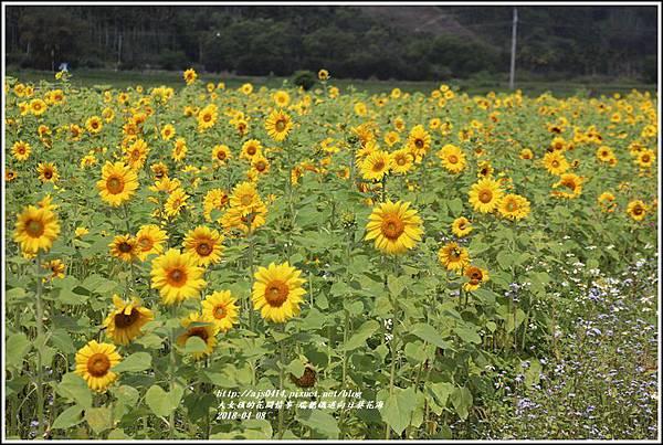 瑞穗鐵道向日葵花海-2018-04-09.jpg