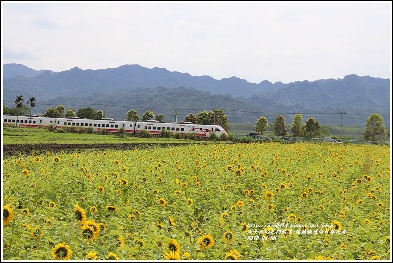 瑞穗鐵道向日葵花海-2018-04-33.jpg