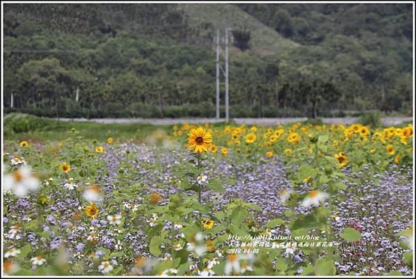瑞穗鐵道向日葵花海-2018-04-36.jpg