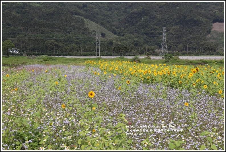 瑞穗鐵道向日葵花海-2018-04-35.jpg