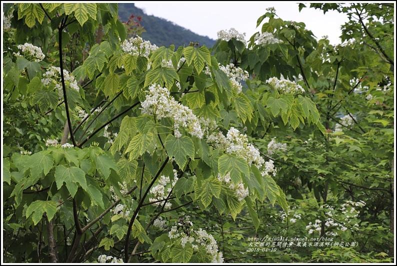 鳳義水源溪畔公園(鳳林桐花公園)-2018-04-05.jpg