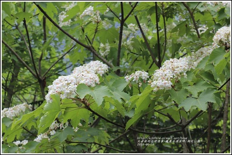 鳳義水源溪畔公園(鳳林桐花公園)-2018-04-09.jpg