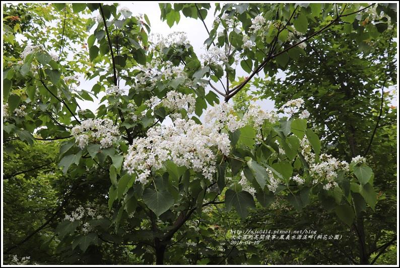鳳義水源溪畔公園(鳳林桐花公園)-2018-04-14.jpg