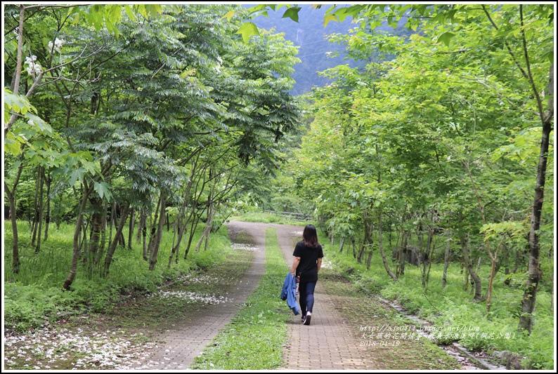 鳳義水源溪畔公園(鳳林桐花公園)-2018-04-21.jpg