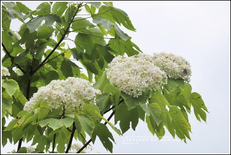 鳳義水源溪畔公園(鳳林桐花公園)-2018-04-24.jpg
