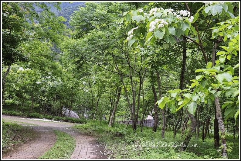 鳳義水源溪畔公園(鳳林桐花公園)-2018-04-29.jpg