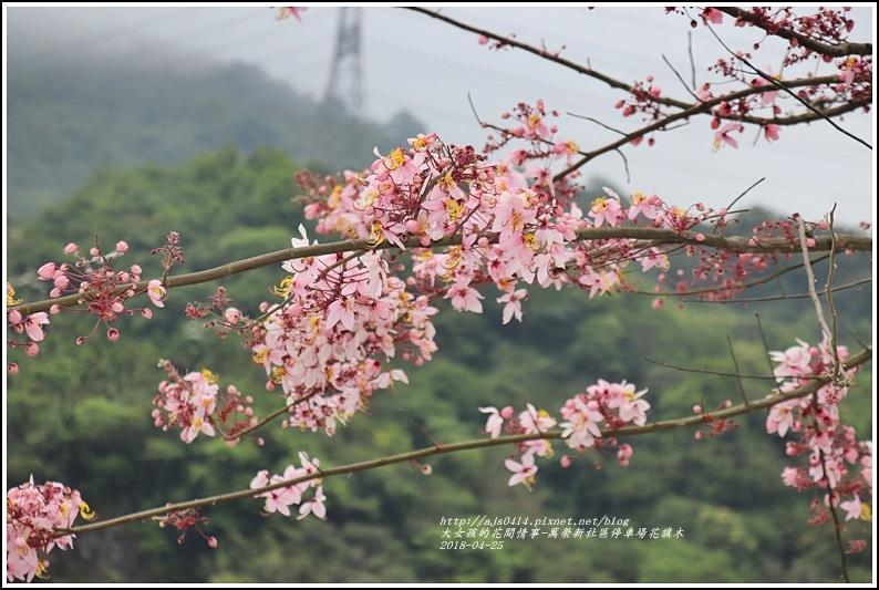 花旗木(萬榮新社區停車場)-2018-04-07.jpg