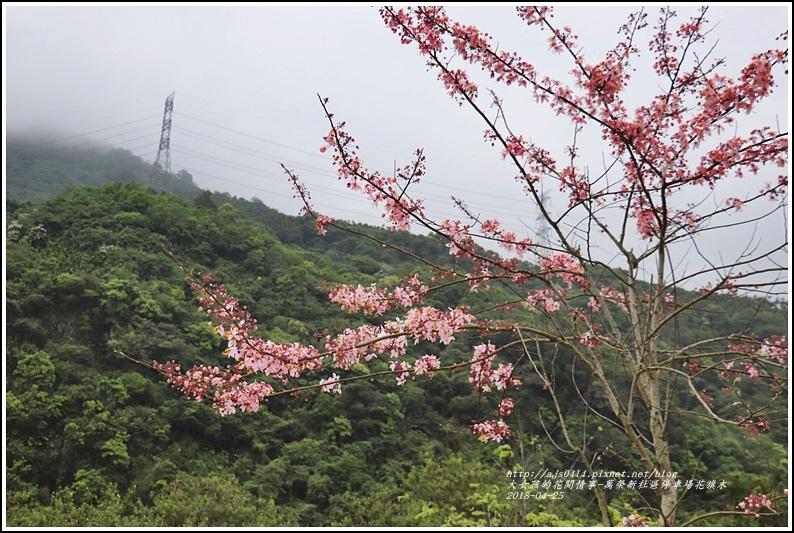 花旗木(萬榮新社區停車場)-2018-04-06.jpg