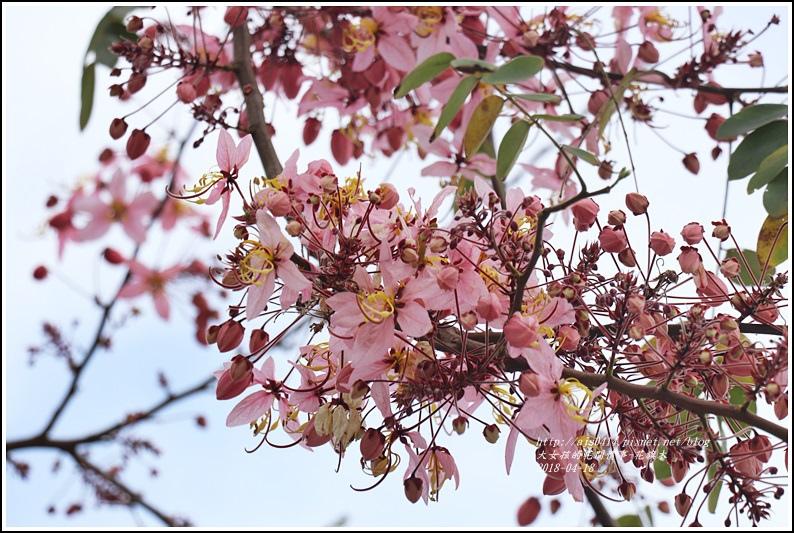 花旗木-2018-04-04.jpg