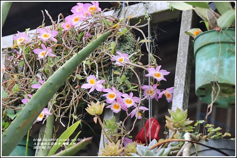 蟠龍石斛-2018-04-01.jpg