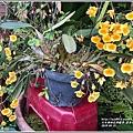 黃金石斛-04-01.jpg