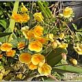 黃金石斛-04-02.jpg
