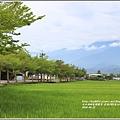 193縣道春日小葉欖仁樹-2018-04-03.jpg