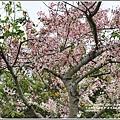 鹿鳴溫泉酒店花旗木-2018-04-02.jpg