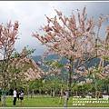 鹿鳴溫泉酒店花旗木-2018-04-03.jpg