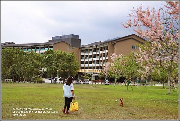 鹿鳴溫泉酒店花旗木-2018-04-08.jpg