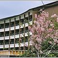 鹿鳴溫泉酒店花旗木-2018-04-12.jpg