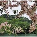 鹿鳴溫泉酒店花旗木-2018-04-14.jpg