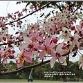 鹿鳴溫泉酒店花旗木-2018-04-21.jpg